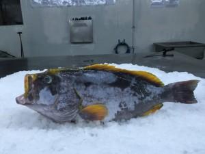 reeffish2