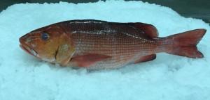 reeffish3
