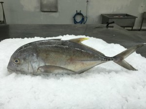 reeffish4